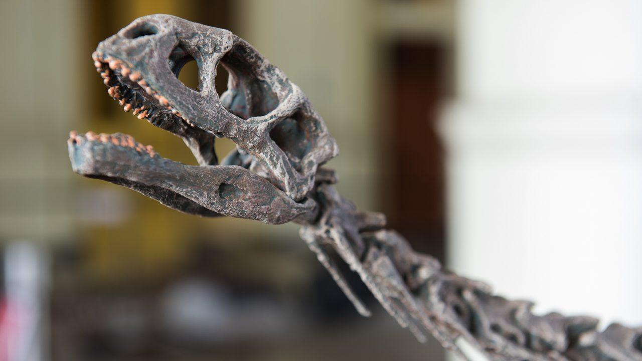 El MNHN inaugura la primera exposición de dinosaurios de la historia de Chile